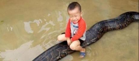 Criança brinca com cobra gigante (Foto: Captura de vídeo)