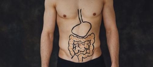 Il microbiota integro è l'elisir di lunga vita