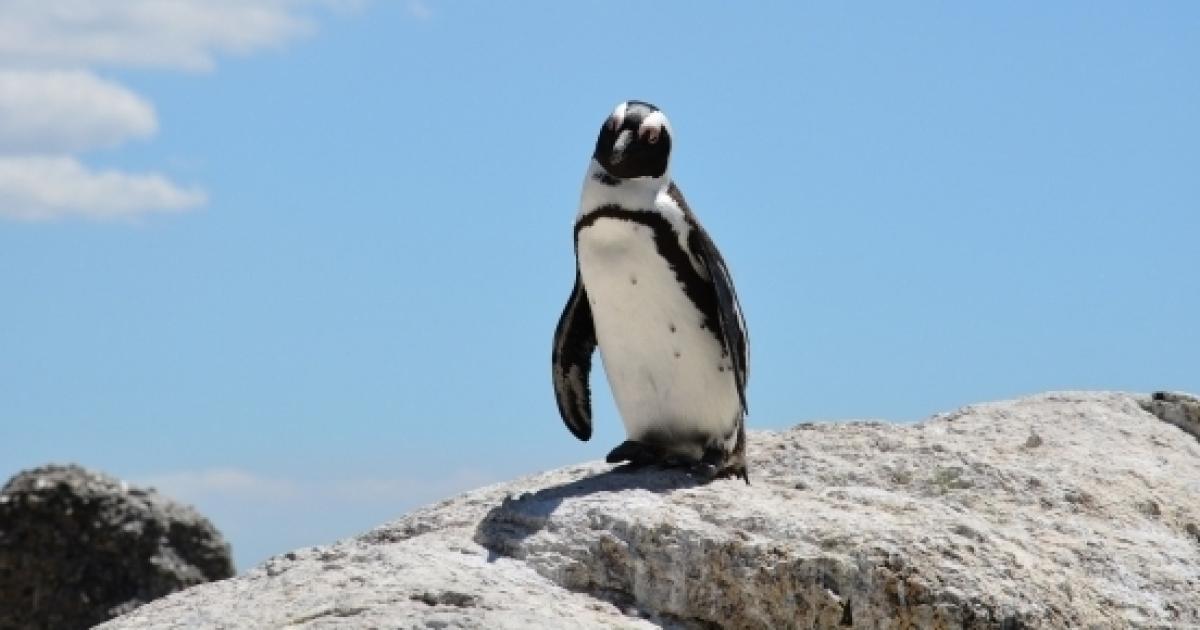 La commovente storia d amore tra un pinguino e figura