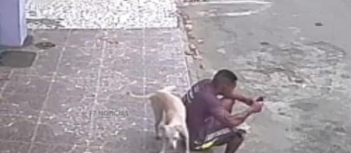 Vídeo de cachorro urinando nas costas de rapaz viraliza na web