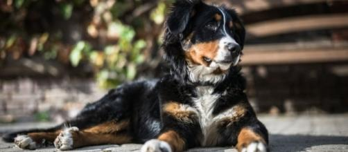 When a family urgently evacuated their home their dog was left behind - but they found her later [Image credit: Pexels/CC0]