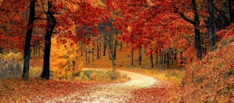 Fall - Free pictures on Pixabay - pixabay.com