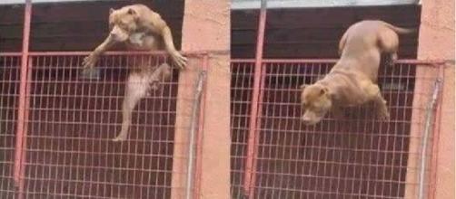 Veja como sobreviver a um ataque de um cachorro