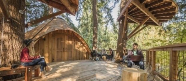 Microsoft has created treehouse work spaces for employees/Image Credit: Microsoft Blog