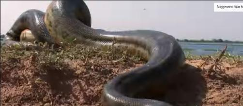 5 Grown Men Vs. 1 Big Snake | National Geographic [Image credit - National Geographic | YouTube]
