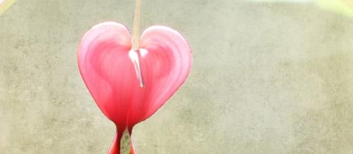 Pink heart / Nick Kenrick via Flickr