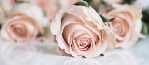 Pink roses / Maria Eklind via Flickr