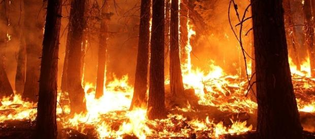 Arson is believed to be the cause of wildfires in Portugal and Spain, with help from Hurricane Ophelia [Image credit: CC0/Pixabay]