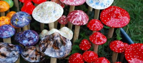 Magic mushrooms in Hawaii. [Image via Wikimedia Commons, Janine]