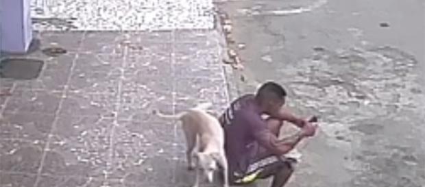 Cão urina em rapaz sentado na calçado e vídeo viraliza