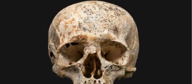 Seu crânio e dentes em estado bastante conservado