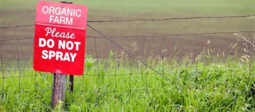 Photo Credit: The Organic and Non GMO Report Ken Roseboro