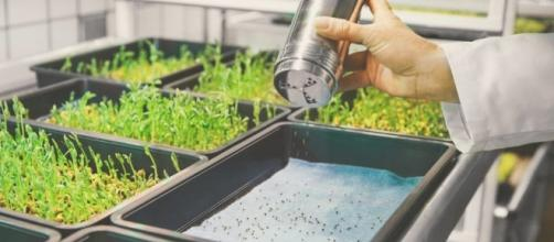 This Innovative Farm Grows Food Three Times Faster Than a Regular ... - futurism.com
