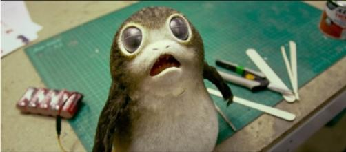 What are Porgs? - Star Wars: The Last Jedi | HelloGreedo/YouTube Screenshot