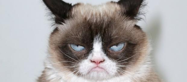 Saiba quando e porque seu gato está irritado
