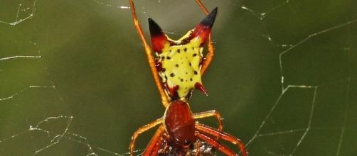 Da divinità a cartone animato il ragno pikachu