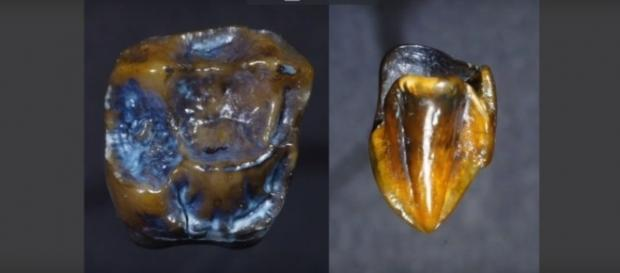 Prehistoric teeth fossils may rewrite human history. [Image Credit: YouTube/GeoBeats News]