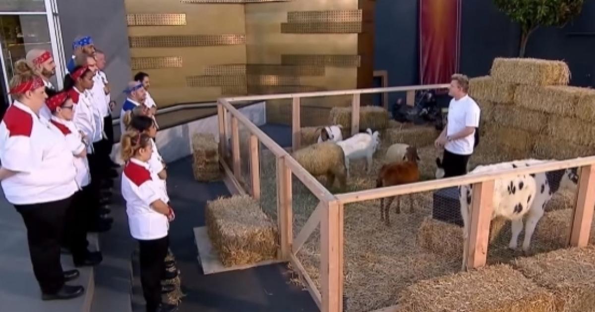 Hell S Kitchen All Stars Episode 5 Gordon Reveals