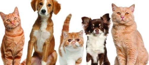 Cuida la salud de tus perros y gatos