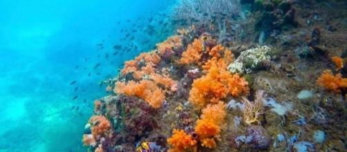 Corals on the sea bed (Image credit – Fabian Lambeck – Wikimedia Commons)