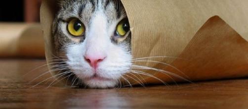 Cosas que no sabías sobre los gatos