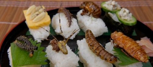Saranno circa duemila le specie di insetti inserite nella lista dei Novel Food a partire dal 2018