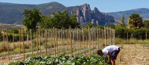 Agricultura ecologica, alimentos para la prevención del cáncer