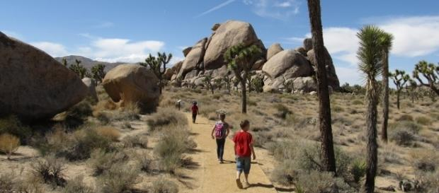 A missing couple who went hiking in California's Joshua Tree national Park was found dead (Image Credit: Ken Lund/Flickr)