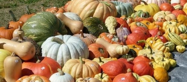 Everything You Want To Know About Pumpkins - com.au
