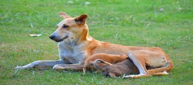 Los perros influyen positivamente en la vida de los humanos. Public Domain.