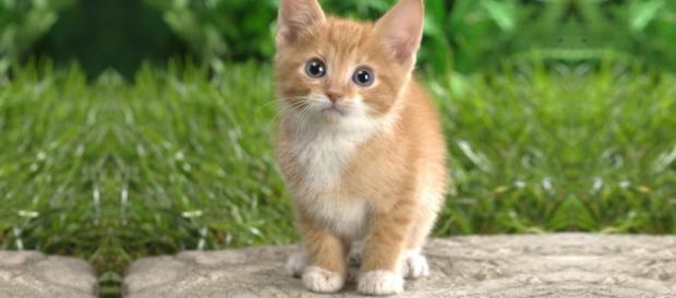 Os gatos são inteligentes, carinhosos e você precisa conhecê-los melhor
