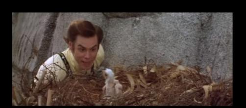 """Ace Ventura"" is getting a new movie through Morgan Creek Entertainment Group. [Image:ppcontact/YouTube]"