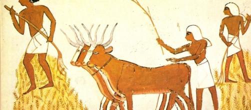 Campesinos egipcios recogiendo la cosecha de cereales, ayudados por animales.