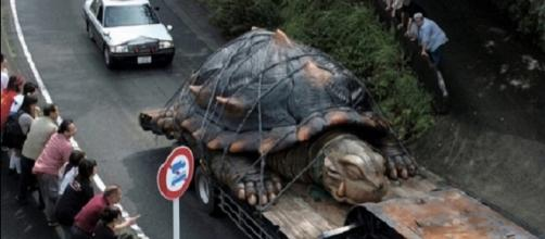 Maiores animais que já se conseguiu capturar na natureza