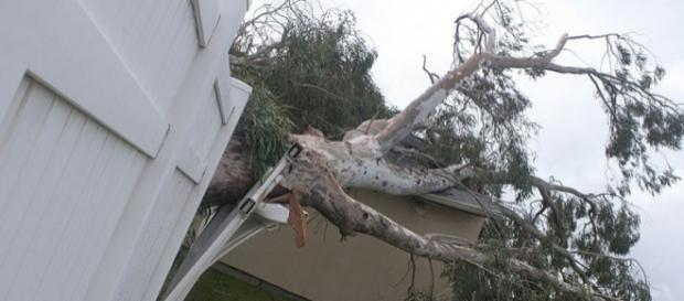 Hurricane Sandy uproots a tree (Image credit - Brett Perkins - Wikimedia Commons)