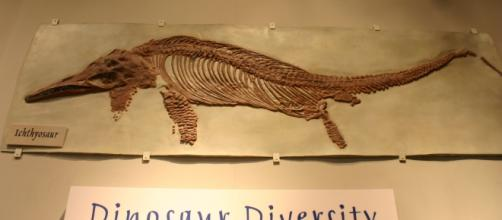 Researchers have discovered a giant Ichthyosaur fossil in India. (Image Credit: Ryan Somma/Wikimedia Commons)
