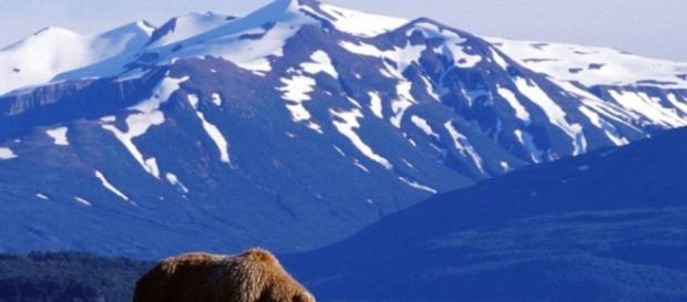 É no Alasca que se encontra uma das maiores populações de ursos do planeta