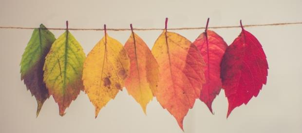 Come d'autunno sugli alberi il colore delle foglie | Eva lo sapeva - evalosapeva.com