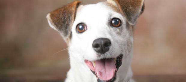 Faça o teste e descubra se seu cão o ama de verdade