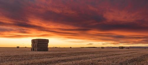Free photo: Field, Agriculture, Harvest - Free Image on Pixabay ... - pixabay.com