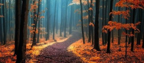 As florestas carregam lendas assustadoras