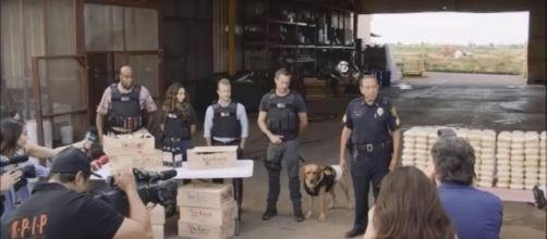 """Hawaii Five-O"" gets a new four-legged team member. [Image Credit: Xetcrw/YouTube]"