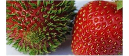 Veja como as frutas se desenvolvem com o tempo