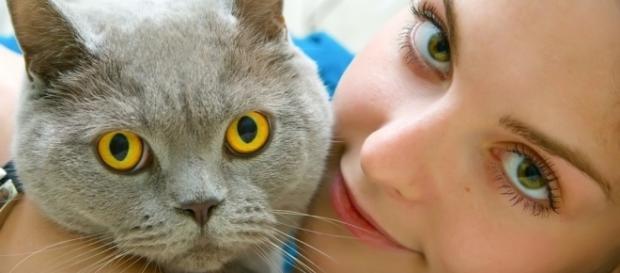 O seu gato o ama de verdade realmente?