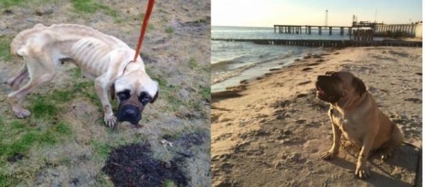 O antes e o depois da doce Violet
