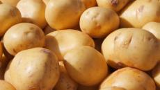"""El uso de las patatas """"doradas"""""""