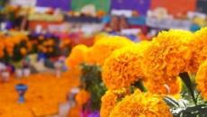 La Flor de Cempasúchil ya no es mexicana
