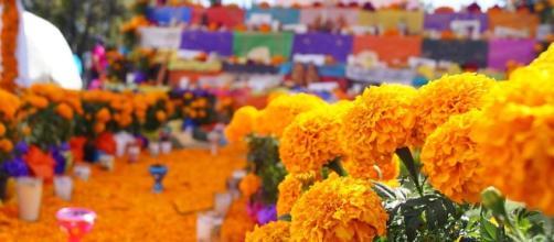 Flor de cempasúchil en la tradición mexicana