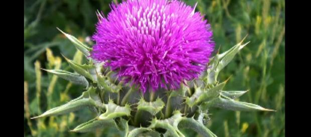 Many herbs (like milk thistle) can help you out. -- YouTube screen capture / Healing Power Hour