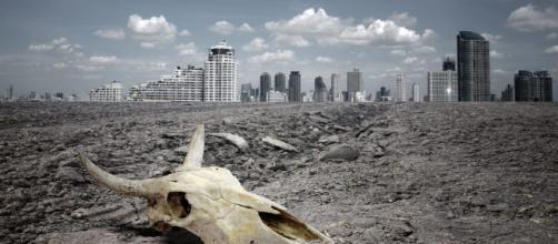 13 pasos para acabar con la extinción de animales de aquí al 2100 ... - expoknews.com